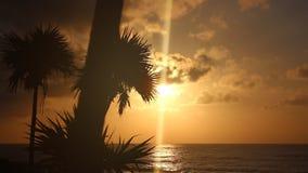 ` S de la silueta de las palmeras temprano por la mañana almacen de video