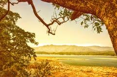 ` S di Sambhar & di verde giallo a terra immagini stock libere da diritti