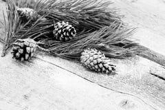 ` S do ano novo, composição do xmas um ramo do pinho com cones do pinho em um fundo de madeira velho Fotografia de Stock Royalty Free