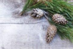 ` S do ano novo, composição do xmas um ramo do pinho com cones do pinho em um fundo de madeira velho Imagens de Stock Royalty Free