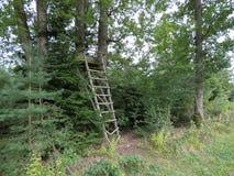` S do caçador alto na borda da floresta Foto de Stock Royalty Free