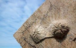 ` S do Marguerite de Saint oposto ao depósito no mar Baía de Somme do close-up, França Fotografia de Stock