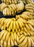 Są dobrzy dla was codziennych banany? Zdjęcia Royalty Free