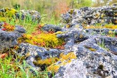 s?dra france Svart sten och mångfärgade växter royaltyfria bilder