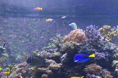 S E A Akvarium i Singapore Royaltyfria Foton