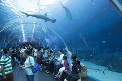 S E a Aquarium à Singapour Photos stock
