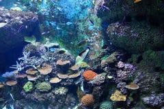 S e Een Aquarium Singapore Stock Foto