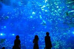 S E Ett akvarium Singapore Arkivbilder