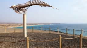 ` S El Cotillo Cuvier клевало скелет кита, Фуэртевентуру, Канарские острова, Испанию стоковое фото rf