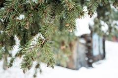 s'embranche l'arbre de sapin de cônes Photo libre de droits