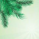 s'embranche le pin illustration libre de droits