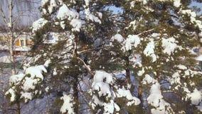 S'embranche les arbres coniféres dans le village de pays sur la vue résidentielle de bourdon de maisons de fond Neige sur la bran banque de vidéos