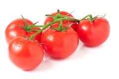 S'embranchent cinq tomates d'isolement sur le fond blanc Image libre de droits
