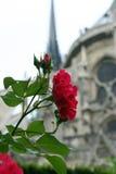 s'est levé de Notre Dame Photos stock