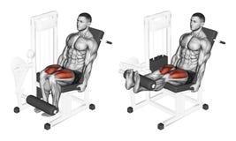s'exercer Extension de jambe dans le simulateur sur le quadriceps Images libres de droits