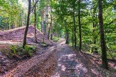 ` S Forest Walks de Escocia en otoño de los bosques hermosos de Crieff Imagenes de archivo