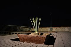 ` S garden5 maguey Стоковая Фотография RF