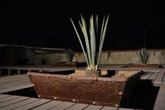 ` S garden4 maguey стоковая фотография
