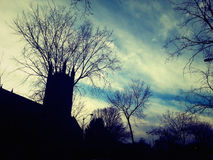 When it's getting dark. Trees branched into the sky like powerful paws Royalty Free Stock Photography
