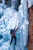 She's got game. Woman ice climber ascending fluted ice fang Royalty Free Stock Image