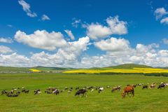 Hulunbuir Grassland. It`s in Hulunbuir, Inner Mongolia, China. a amazing grassland royalty free stock photos