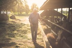 It`s important that they are all in number. Senior man on his farm with animals. Copy space stock image