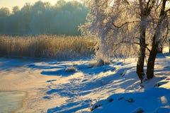 s krajobrazowa zima Fotografia Royalty Free