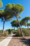 Pine forest of Algaida. It´s located in the Doñana Natural Area within the municipality of Sanlucar de Barrameda, España stock images