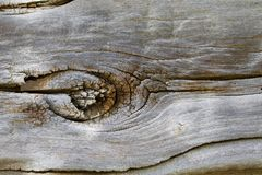 1850`s Log Cabin Knot. A closeup of a knot from an 1850`s log cabin log shows in closeup Royalty Free Stock Photos