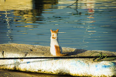 It's lonely out there!. A lone cat sitting at the harbour Royalty Free Stock Image