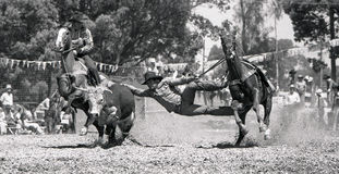 It's a long way. Unidentified competitor stretches out in the bulldogging event during a small town rodeo, circa 1980 in Kingaroy, Australia Stock Images