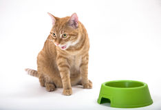 It's mine. Young orange tabby house cat looking looking hostile with it's mouth open showing teeth. Sitting near green food bowl. Isolated against white Stock Image