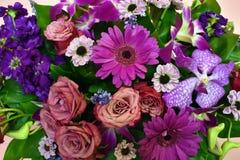 S?ml?s bakgrund av f?rgrika blommor royaltyfria bilder
