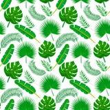 S?ml?s modell f?r palmblad royaltyfri illustrationer