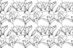 S?ml?s modell med liljablommor Realistiskt skissa liljan vektor arkivbild