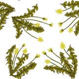 S?ml?s stilfull modell med maskrosor dekorativt blom- f?r bakgrund royaltyfri illustrationer