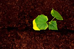 S?mlinge auf dem Garten stockbilder