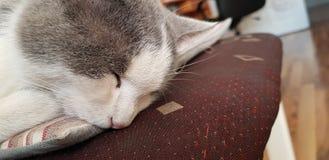 S?mnig katt arkivbild