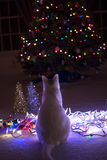 It's the most wonderful time of the year. White kitty cat sitting on the floor watching the christmas tree lights Royalty Free Stock Photography
