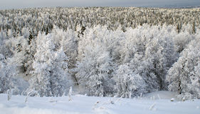 s mrozowy drzewo obrazy stock