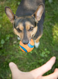 That`s My Ball And You Can`t Have It Stock Image