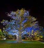 's nachts de boom van de baobab Stock Afbeeldingen