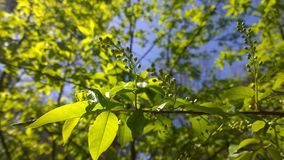 It`s a new life. Green one, living in a forest near Protvino royalty free stock photography