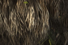 Grasses on a tree in Southern Florida Stock Photo