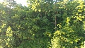 S-occhio del ` dell'uccello Bella foresta archivi video