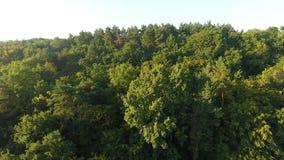 S-occhio del ` dell'uccello Bella foresta video d archivio