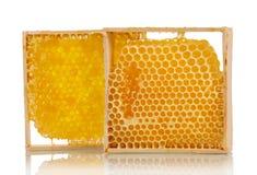Słodcy honeycombs z miodem Zdjęcie Royalty Free