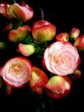 Słodcy mali kwiaty Zdjęcie Royalty Free