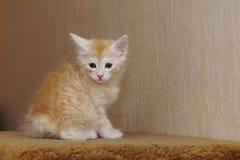 słodka kociaki czerwony Fotografia Stock