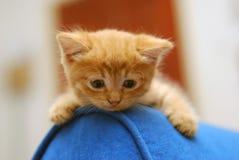 słodka kotku Fotografia Royalty Free